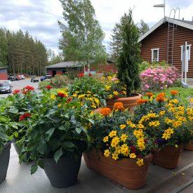 Ritun_puutarha_kesäkukka_istutuksia_ideoita_kukkaistutuksiin25