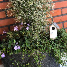 Ritun_puutarha_kesäkukka_istutuksia_ideoita_kukkaistutuksiin43