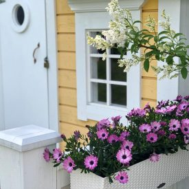 Ritun_puutarha_kesäkukka_istutuksia_ideoita_kukkaistutuksiin60