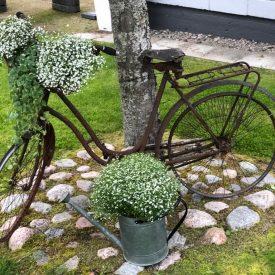 Ritun_puutarha_kesäkukka_istutuksia_ideoita_kukkaistutuksiin61