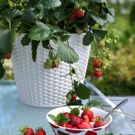 Ritun_puutarha_kesäkukka_istutuksia_ideoita_kukkaistutuksiin64