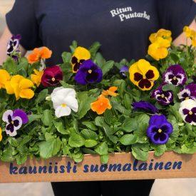 Ritun_puutarha_kesäkukka_istutuksia_ideoita_kukkaistutuksiin7