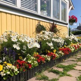 Ritun_puutarha_kesäkukka_istutuksia_ideoita_kukkaistutuksiin70